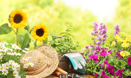 Qué hierbas medicinales puedo cultivar en casa
