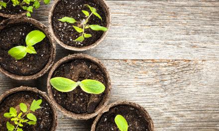 Consejos para tu cultivo urbano en macetas