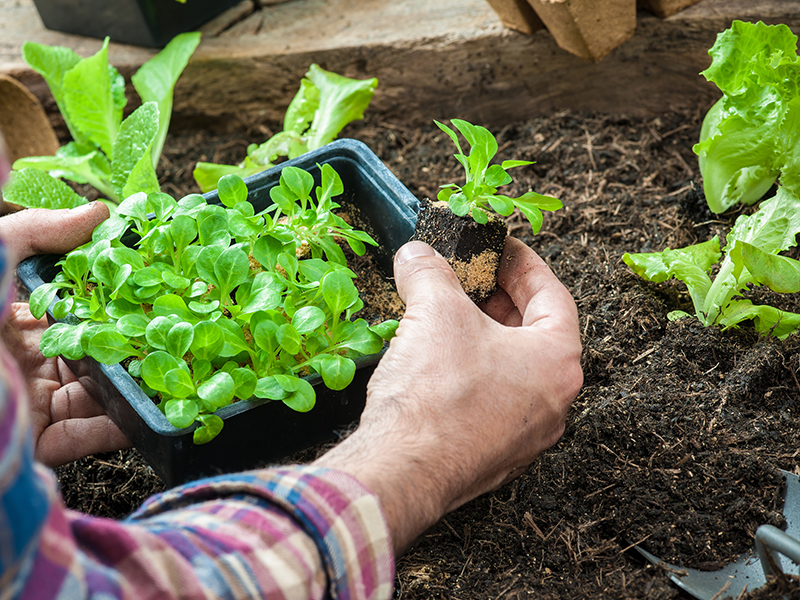 plantar montar huerto urbano