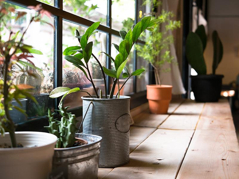 plantar ventana montar huerto urbano